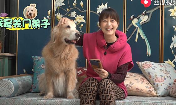 Châu Hải My nuôi nhiều chó ở biệt thự triệu USD