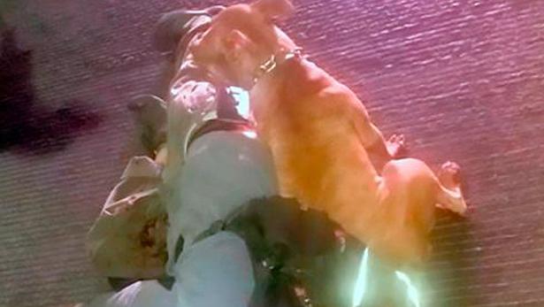 Chó đứng canh sau khi chủ trúng đạn