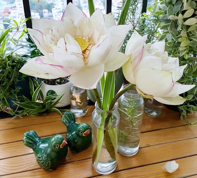 Sau khi mua hoa sen về, chị thường ngâm cánh hoa trong bồn hoặc lấy vòi hoa sen xả vào cuống, treo ngược hoa để nước lên tới bông dễ dàng hơn. Tới hôm sau, chị bắt đầu cắm hoa, thường áp dụng nguyên tắc ít hơn là nhiều hơn, tức là chú trọng về tính thẩm mỹ, khâu lên bố cục hơn là cắm hoa số lượng lớn.
