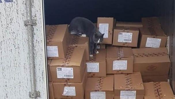 Mèo sống sót 3 tuần trong container chở hàng