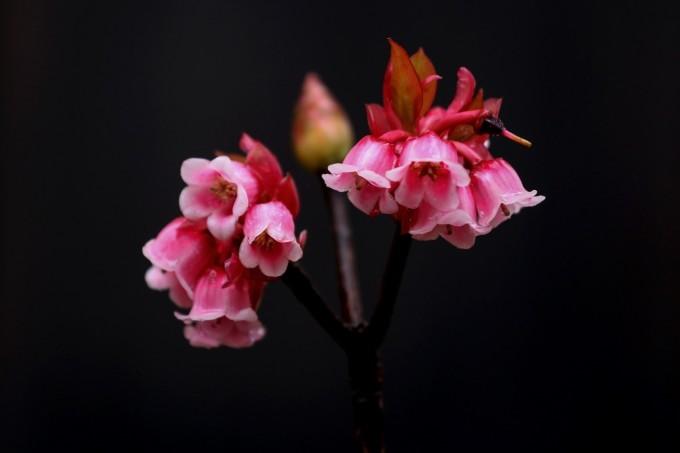 Bà Nà năm nay, ngoài mùa hoa đào chuông thanh tao, cũng rộn ràng một lễ hội mùa xuân với muôn sắc tulip, hướng dương rực rỡ cùng những show nghệ thuật độc đáo vốn đã làm nên bản sắc của khu du lịch suốt bao năm qua. Bởi thế, với nhiều du khách, Bà Nà Hills từ lâu đã là điểm hẹn du xuân phải đến mỗi dịp Tết về.