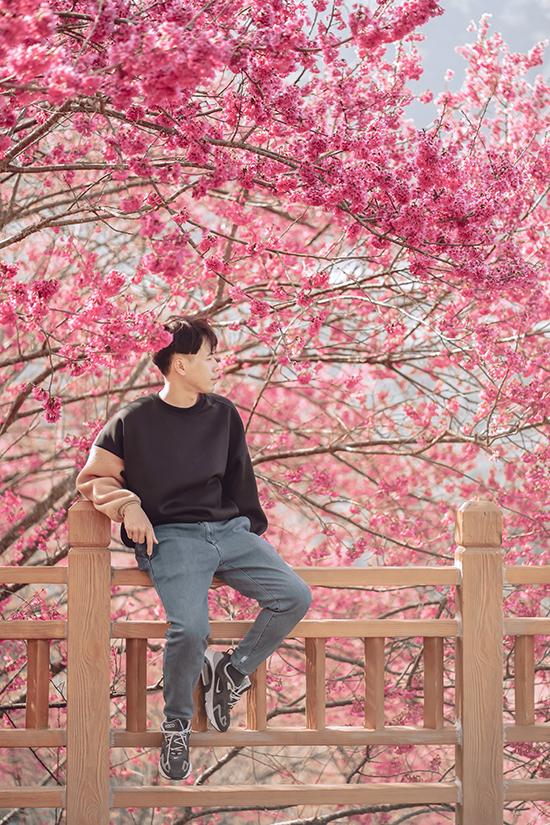 Hoa anh đào Đài Loan - 14