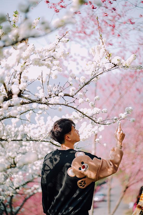 Hoa anh đào Đài Loan - 10