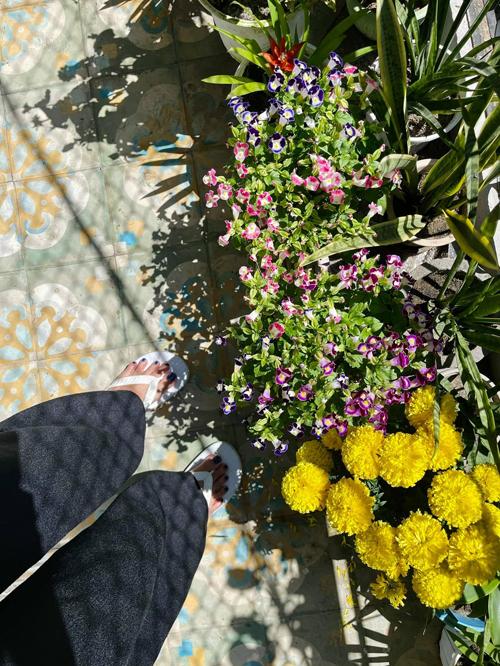 Mùng 2 Tết, Minh Triệu cũng tiết lộ thêm một số cây hoa mà ba mẹ mua để nhà có sắc xuân như cúc vạn thọ, cây dạ yến thảo. Ngoài ra có cây cảnh chịu hạn tốt như lưỡi hổ.