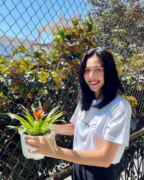Minh Triệu khoe sắc bên cây phong lộc hoa, hay còn gọi là cây dứa nến. Mỗi cây có một bông hoa duy nhất, trong phong thủy phong lộc hoa còn là biểu tượng của sức sống mãnh liệt, giúp cân bằng vượng khí và mang lại tài lộc cho gia chủ.