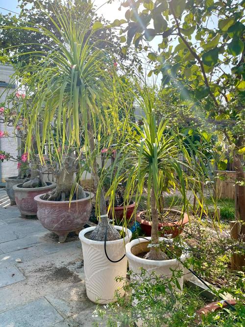 Cô chụp lại ảnh nhiều loại cây cảnh trong vườn nhà ba mẹ và tếu táo viết: Tưới hết nhiu cây mỗi ngày là đủ bận.