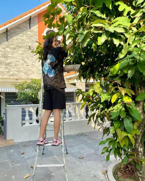 Ngày mùng 9 Tết, Minh Triệu khoe nhiều góc trong vườn nhà của ba mẹ. Cô bắc thang để lên hái những trái mận (roi) chín cây do bố trồng. Minh Triệu tiết lộ: Cây nhà không xài thuốc mà được cái trái vẫn ra lia lịa. Ăn được gần hết các cây, mình đang me cây mít nữa, chín rụng là ăn liền.