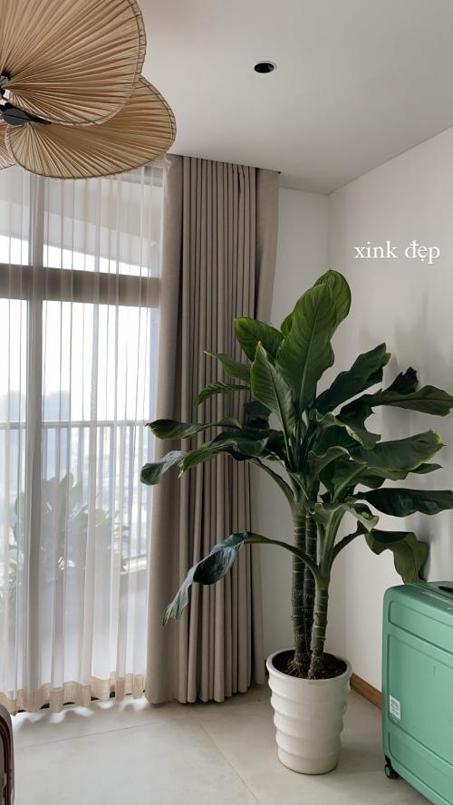 Nơi này cũng được lắp quạt trần giống phòng khách, có cây xanh và phía bên ngoài là ban công cũng trồng cây xanh.