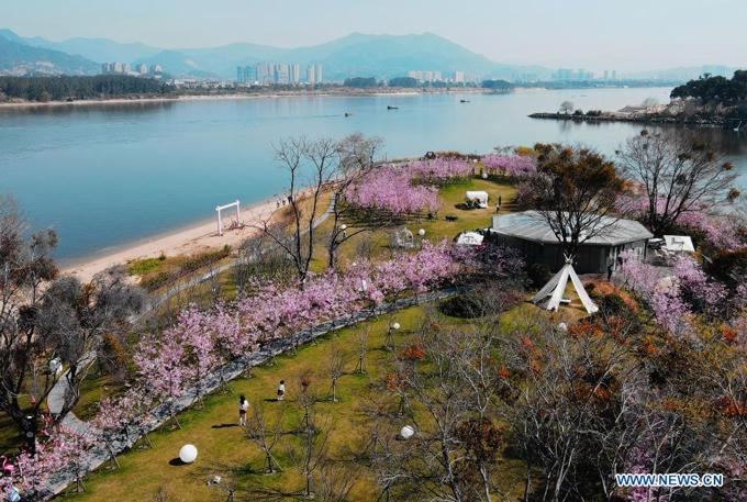 Phúc Kiến - tỉnh phía đông nam Trung Quốc - sở hữu bờ biển xinh đẹp cùng nhiều danh thắng nổi tiếng. Đầu tháng 2, hoa anh đào ở làng Shadi của thị trấn Shangjie, huyện Minhou, thành phố Phúc Châu, tỉnh Phúc Kiến nở rộ.
