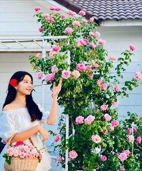 Con gái Lọ Lem của cặp vợ chồng thu hoạch hoa hồng trong vườn nhà.  Sân thượng với hàng trăm gốc hồng ngoại và hồng cổ được chị Dạ Thảo đặt tên Khu vườn của Ngọc - Thảo - Linh.