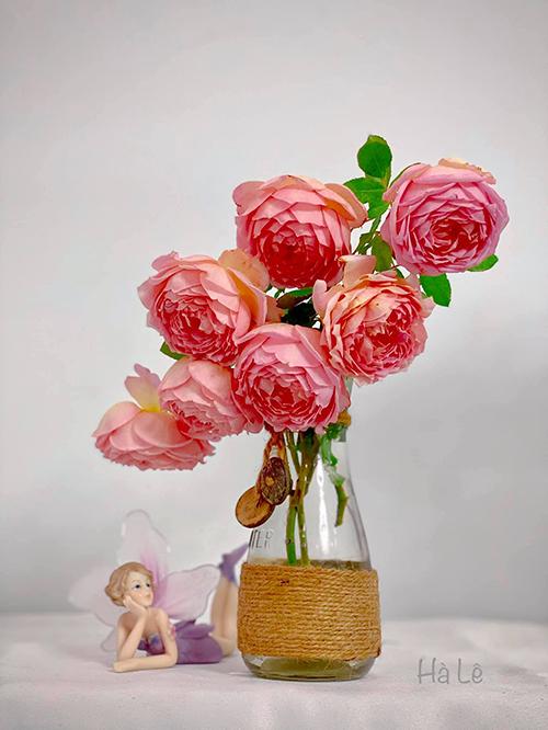 Với bình nhỏ, chị Hà cắm ít hoa cho vừa miệng bình, cắm theo kiểu bất đối xứng, thấp dần từ phải sang trái. Chị bật mí nếu có điều kiện, bạn phun nước dạng sương cho lá 2-3 lần mỗi ngày , để chỗ thoáng, tránh gió quạt và điều hoà để hoa tươi lâu hơn.