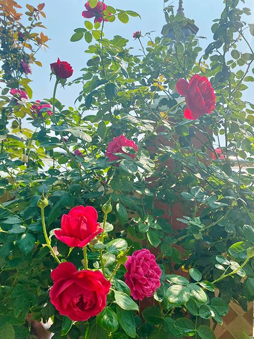 Tuy nhiên cũng có người hỏi vì sao cô phải tự chăm cây thay vì đi thuê. Giải đáp câu hỏi này, hoa hậu nói: Đối với tôi việc chăm sóc cây cối mang lại ý nghĩa rất lớn, có tác dụng nuôi dưỡng tâm hồn. Chính vì vậy, tôi thích tự làm chứ không nhờ người khác. Tôi rất hạnh phúc khi được ngắm nhìn cây cối lớn lên đơm hoa, kết trái mỗi ngày. Đồng thời được tiếp xúc với nắng gió, được lao động chân tay cũng giúp tôi khỏe mạnh hơn. Một con người vừa khỏe mạnh về thể chất lẫn tâm hồn sẽ trẻ đẹp, lạc quan, suy nghĩ tích cực và phòng ngừa được các bệnh tật.