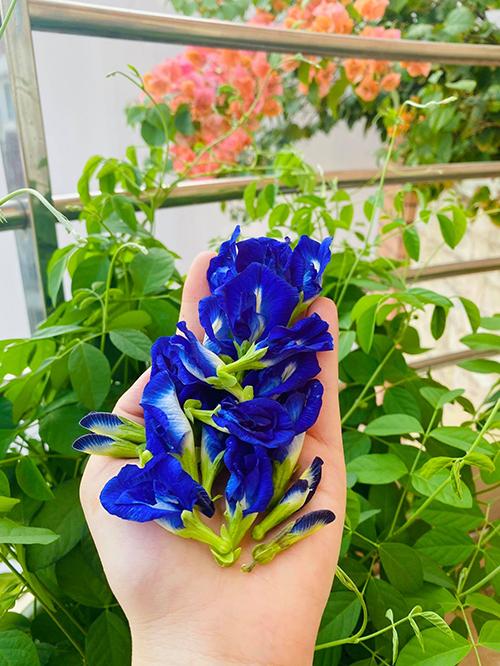 Vườn hơn trăm gốc hồng của hoa hậu Janny Thủy Trần - page 2 - 3