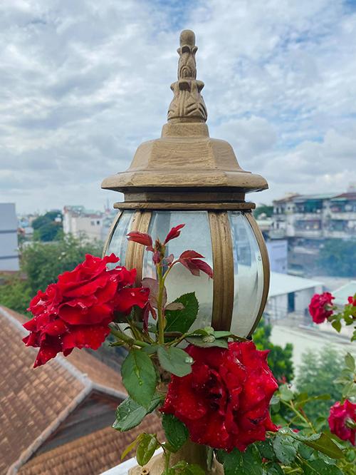 Vườn hơn trăm gốc hồng của hoa hậu Janny Thủy Trần - page 2 - 4