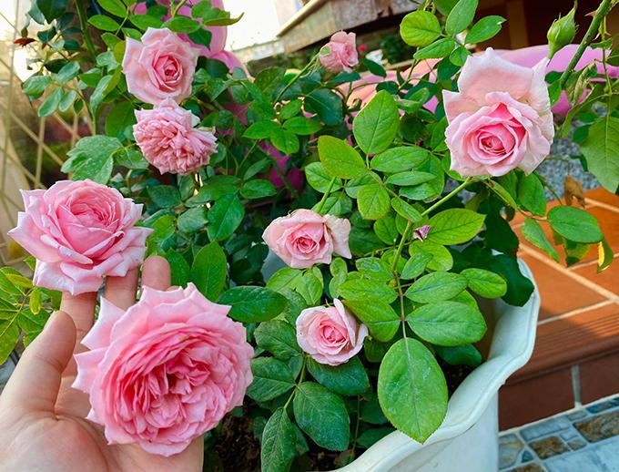 Thành quả của hoa hậu là một sân thượng ngát hương thơm của hoa hồng. Tôi thích những đêm có trăng sáng được nằm thư giãn giữa vườn hoa dưới ánh trăng. Tôi cảm giác như quên cả thời gian, mọi thứ trôi qua thật êm đềm và bình yên, cô nói.