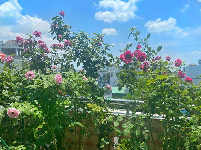 Vườn hơn trăm gốc hồng của hoa hậu Janny Thủy Trần - page 2 - 13